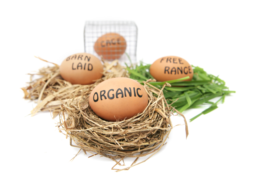 labeled eggs in nests